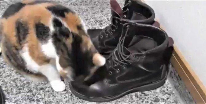 お客様の靴にスリスリしちゃう猫さんが可愛すぎるとSNSで人気!