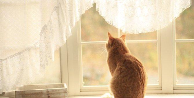 猫が『甘えてこない』ときに考えられる原因5つ!甘えてもらうためにすべき工夫とは?