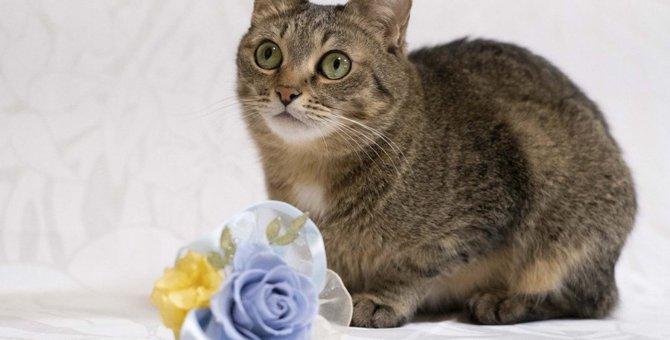 猫が『おもてなし』をしているときの行動5選