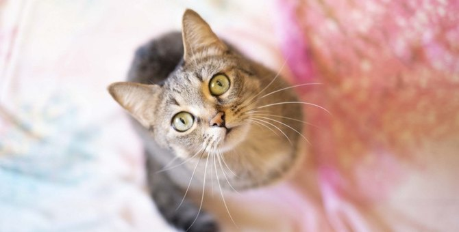 猫が『飼い主は自分』と確信しているときの行動3選