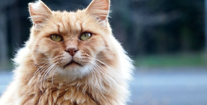 なぜ『耳が欠けている野良猫』がいるの?考えられる3つの理由