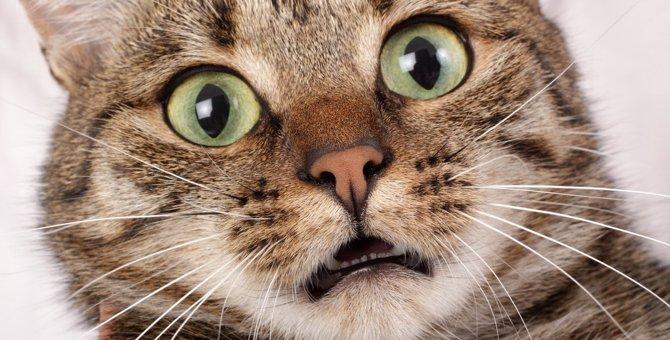 『台風が苦手な猫』がする行動3つとケア方法