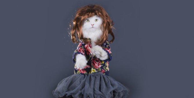 猫がかつらをかぶった可愛い画像4選