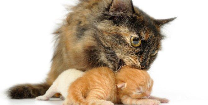 猫が首を噛む4つの理由と困った時の対処法