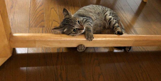 【ミラクル】愛を知った猫の変わりっぷりが話題!