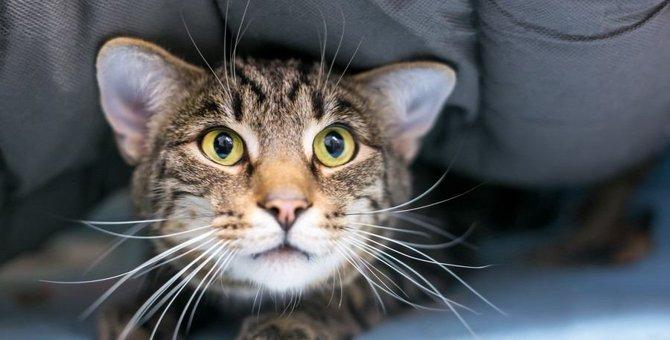 いつも隠れる…。愛猫がご飯を飼い主の前で食べない理由5つ