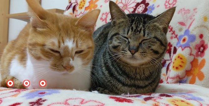 寝てニャイよ?眠気をこらえる姿がシンクロする猫ちゃんず