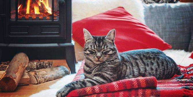 寒い日は猫の『焦げ』に注意!お部屋で暖房を使う時の注意点5つ