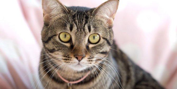 キジトラってどんな猫?