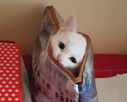 子猫ちゃんの可愛いいないいない…ばぁ!