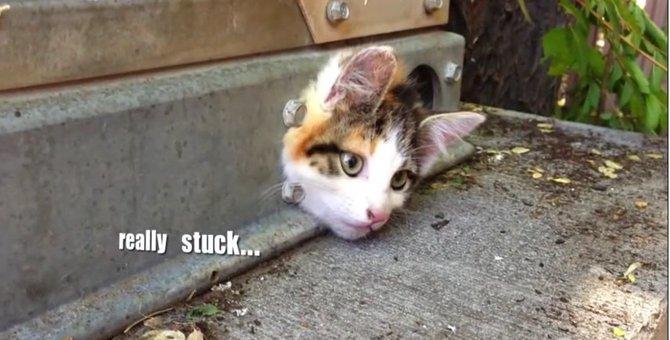 「助けて!」...小さな穴にはまり身動きとれなくなった子猫