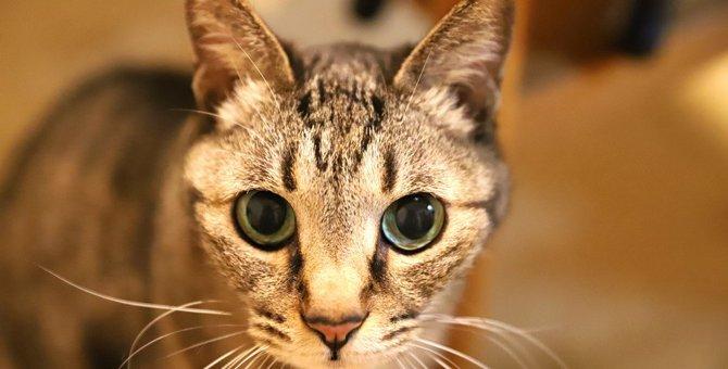 猫の気持ちが分からない人が見逃していること4つ