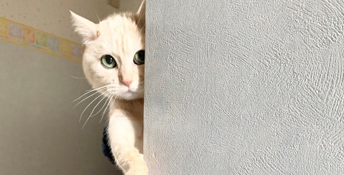 絶対隠れて2足歩行してる!ぬっと覗き込む猫さんが大人気♡