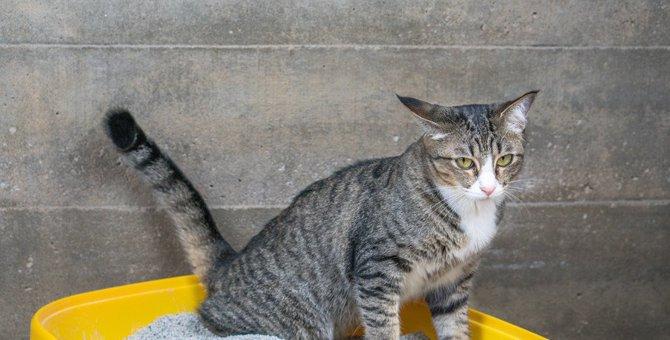 猫が血便を出す…何が原因なの?すぐに病院に行くべき?