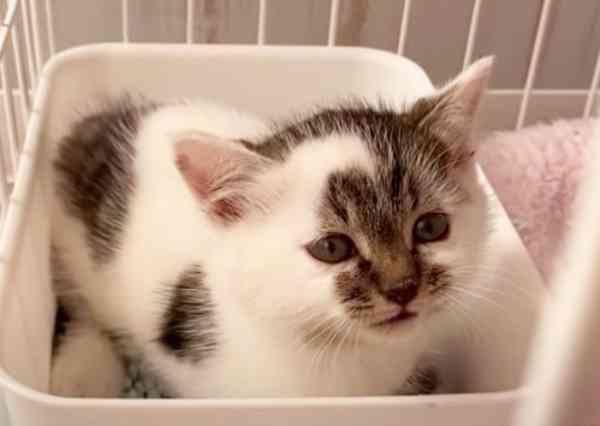 山道で一人ぼっちの子猫を保護…ツンデレの可愛い美猫へ♡