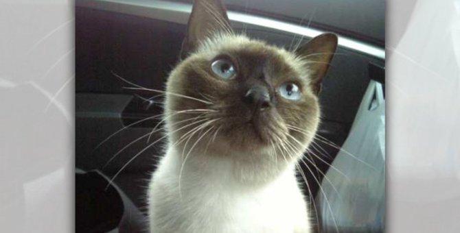 夏の日に職場の駐車場で出会った猫は、保護から2ヵ月で超高額猫に!
