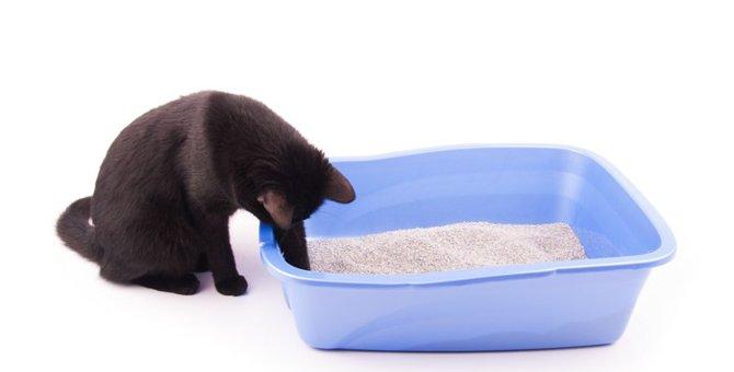 猫にトイレシートをお勧めする理由