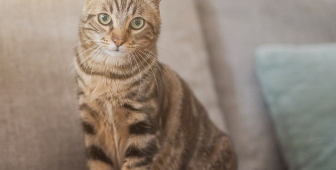 猫からの愛情を失ってしまう飼い主の最低行為4つ