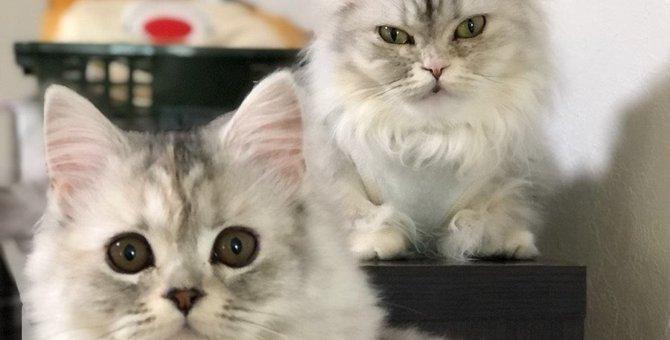 猫が落ち着いて過ごせる『意外な場所』5選