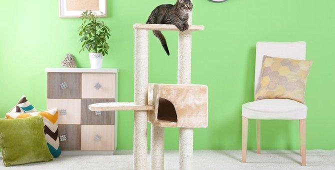 猫が脱臼した時の見分け方や治し方