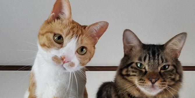 ゆっくり仲良くなろうね!超ビビリな猫むぎちゃんと、弟のトム