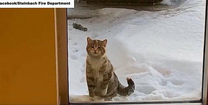 寒さに震える子猫は、消防署に助けを求めました!
