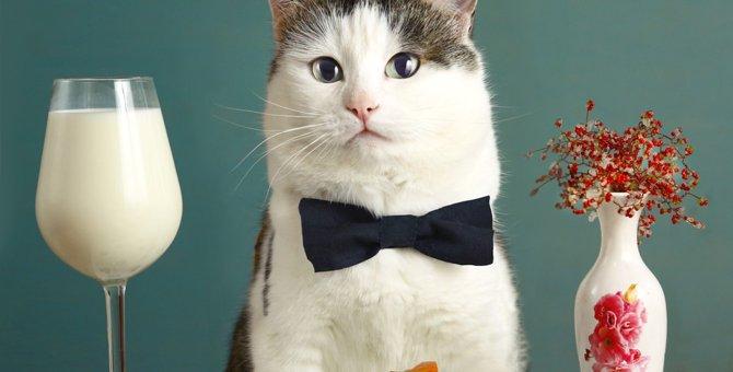 猫の味覚の秘密!実はグルメじゃないって本当?