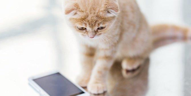 新たなる猫の癒し系アプリ「ねこ釣り」とは