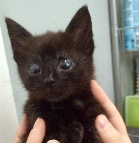 生まれつきまぶたがない猫は保護犬によって心を開いていった