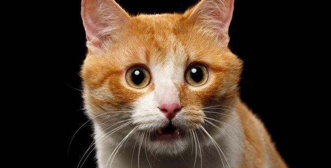 猫が『ニオイに反応して変顔になる』ワケ