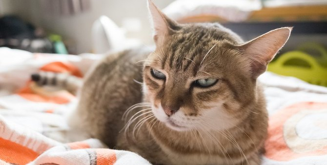 猫が密かにイライラを我慢していること5つ