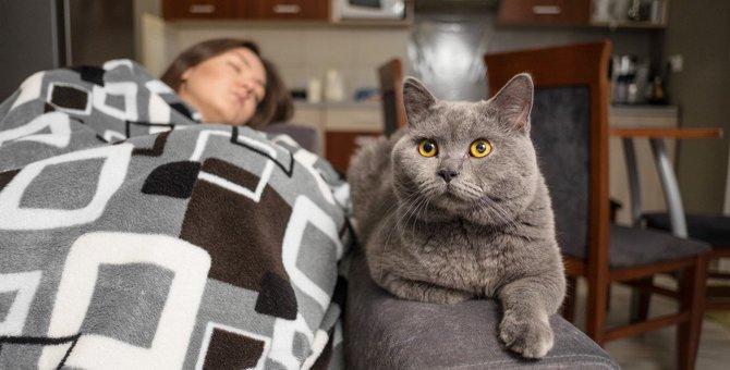 猫が『顔の上』に乗りたがるときの理由3つ!愛猫の気持ちを汲んで対応する方法とは?