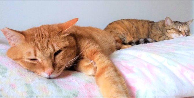 ペット可物件への引っ越し完了。 いざ、保護猫兄妹を我が家へ!