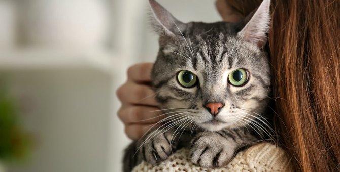 猫との関係にひびが入る可能性のある飼い方4つ