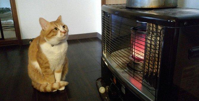 寒い日に猫がするかわいい仕草9選