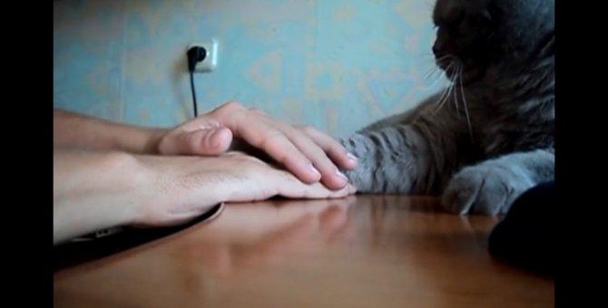 あまりしつこくすると…こうなりますよ!お手手遊びにうんざりな猫!