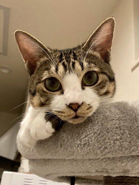 猫を絶対に『室内飼い』すべき理由3選
