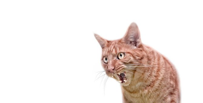 猫が飼い主に怒ってしまう原因5つ