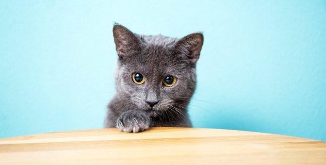 猫は成長すると毛の色が変わる!?年齢による体の変化5つ