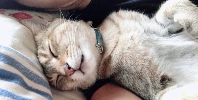 猫のご機嫌をうかがい過ぎる飼い主が陥りがちな失敗5つ