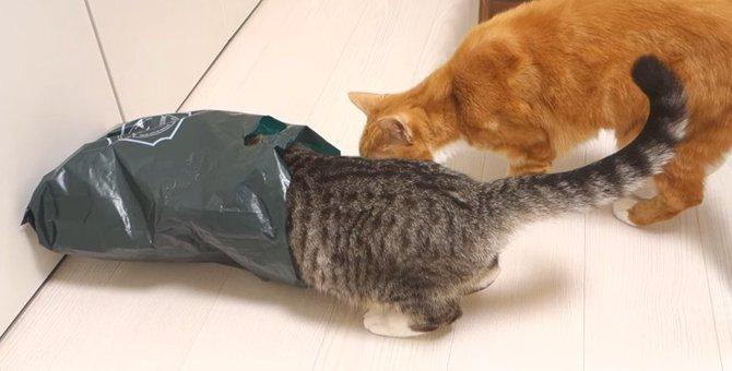 この袋いいにおいがするニャ!頭からINする猫さん!