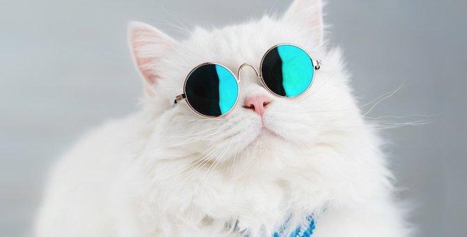猫のマークを作る時に参考になる写真や企業、ブランドまで