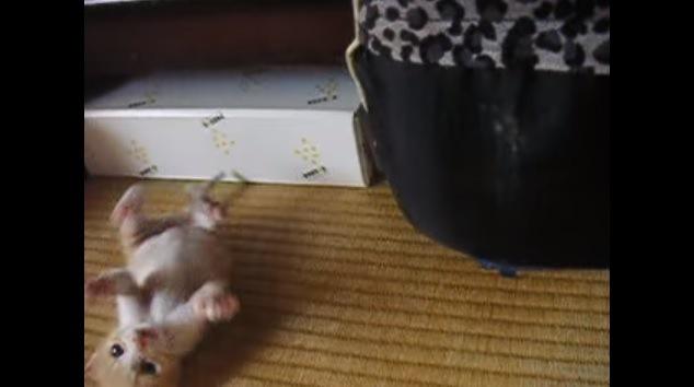 元気に遊ぶ子猫ちゃん、突然のシャットダウン!
