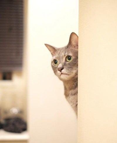 猫が壁や家具にスリスリする理由5つ