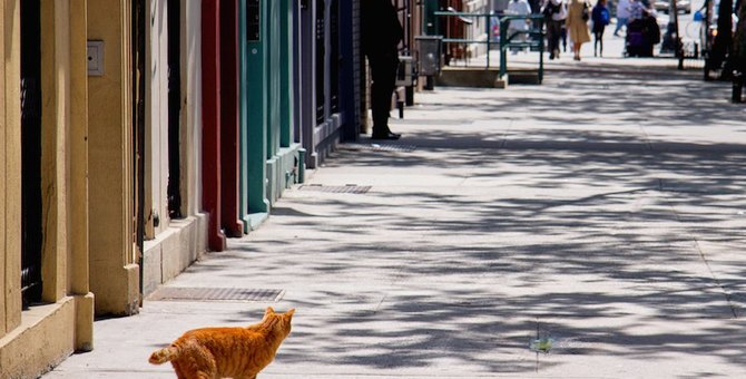 マンハッタナーズってどんなブランド?魅力的な猫グッズを紹介