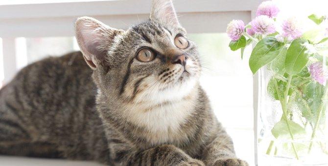 猫の癒やし効果と活用分野について
