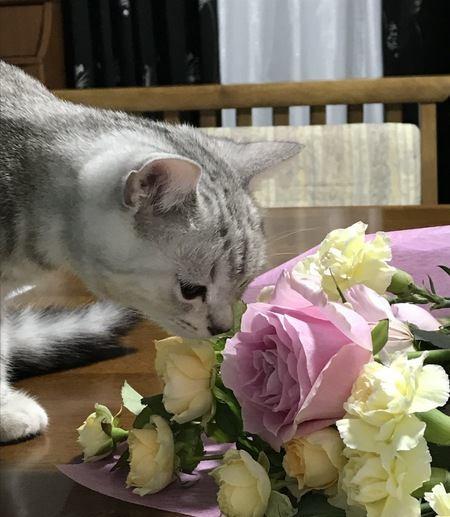 猫から甘い匂いがする理由3つ