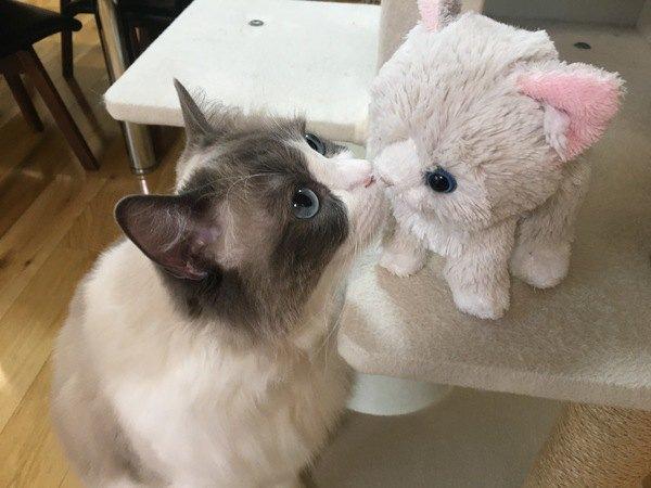 猫が人にしている「挨拶」5パターン