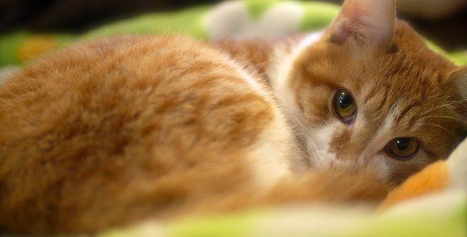 愛猫がてんかんに・・・突然の発作でも慌てないように!