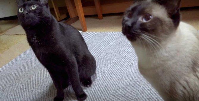 もう騙されないにゃん!しっかりと学習した猫ちゃん